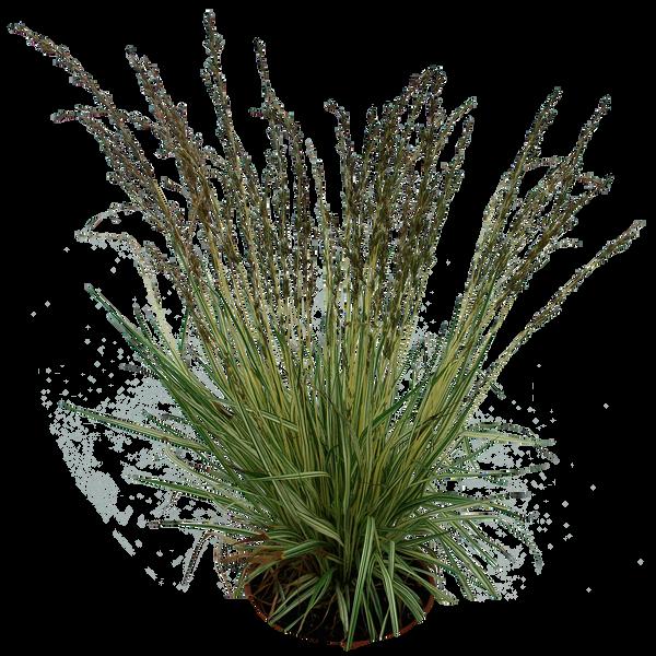 Grass 02 png by gd08 on deviantart for Vegetacion ornamental