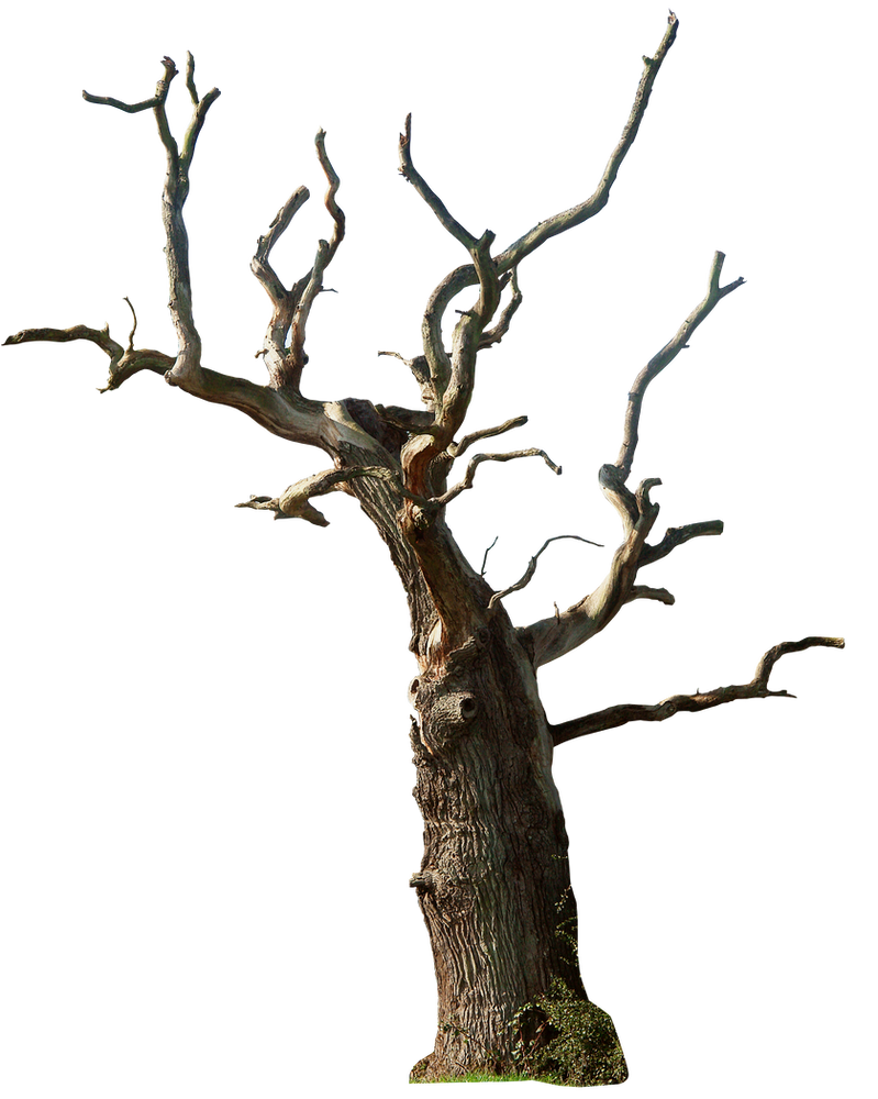 Dead tree 02 png by gd08