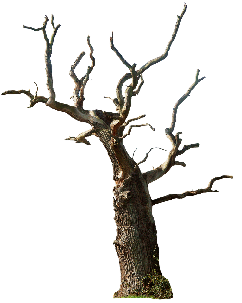 Dead Tree 02 Png By Gd08 On DeviantArt