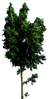 Tree 54 HQ png
