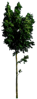 Tree 54 HQ png by gd08