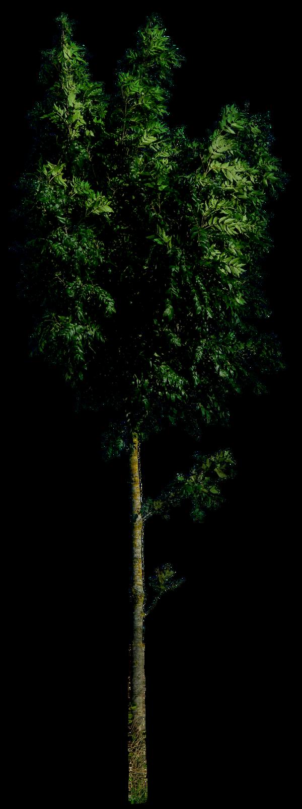 Tree 54 HQ png