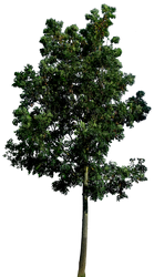 Tree 58 png HQ by gd08