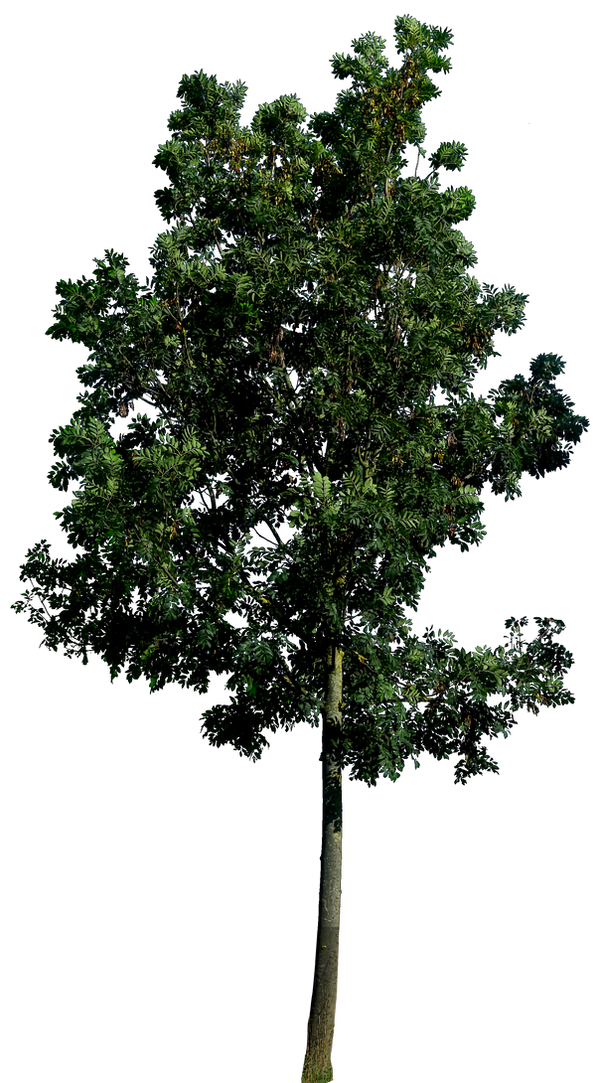 tree_58_png_hq_by_gd08