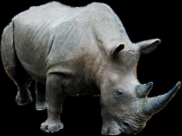 Rhino 03 png HQ