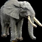 Elephant png HQ
