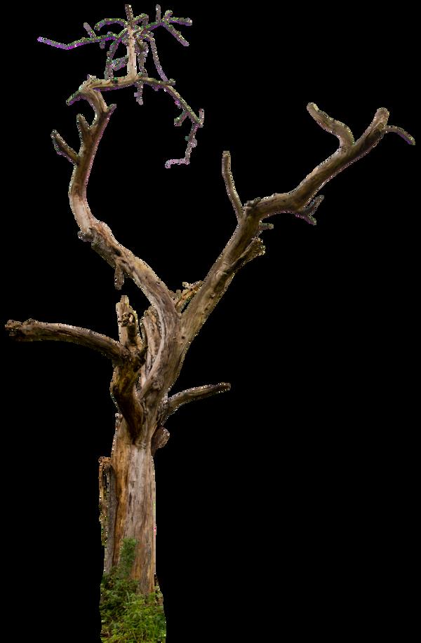 Dead tree 04 HQ by gd08