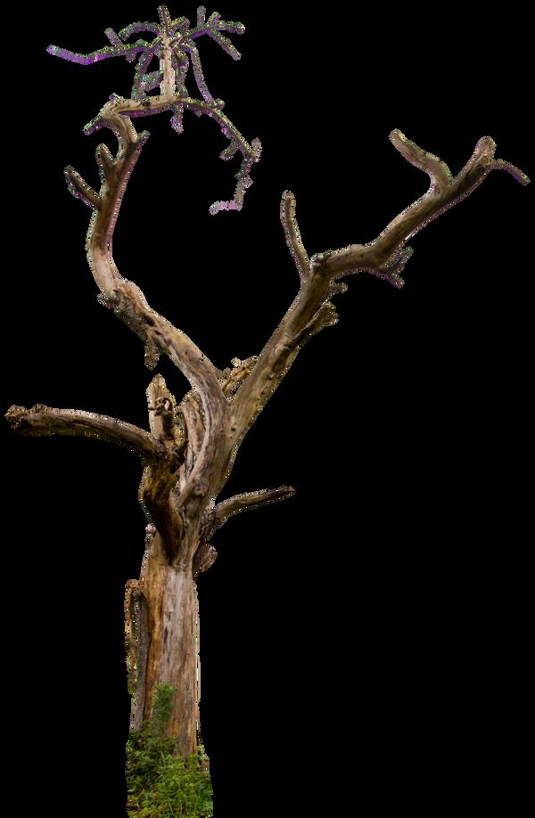 Dead tree 04 HQ
