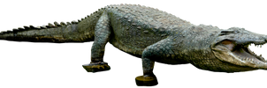Crocodile 01 By Gd08