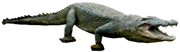 Crocodile 01 By Gd08 by gd08