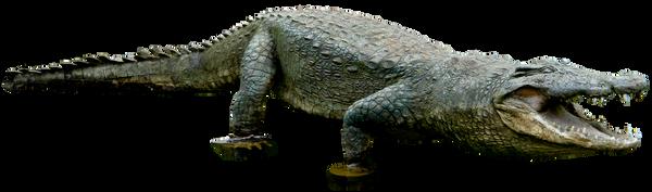 Crocodile 01 By Gd08 by gd08