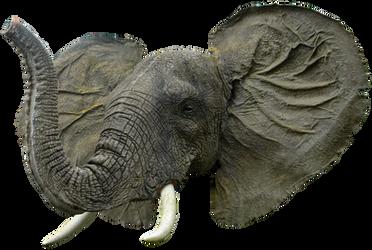 Elephant Head By Gd08 by gd08