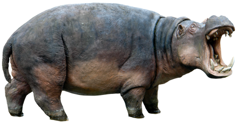 Hippo 01 By Gd08 by gd08