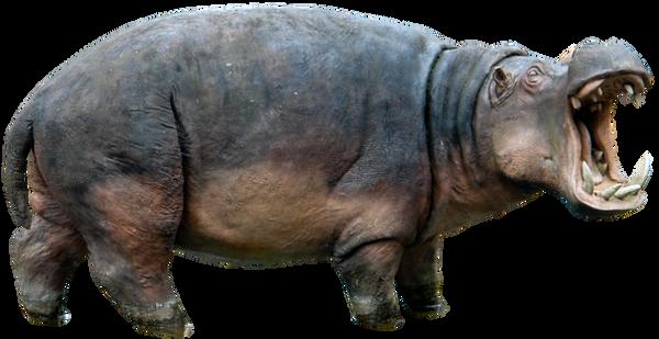 Butlova Gallery: Hippo 01 By Gd08 By Gd08 On DeviantArt