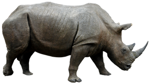 Rhino 01 By Gd08 by gd08