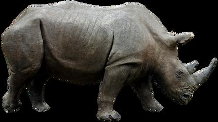 Rhino 01 By Gd08