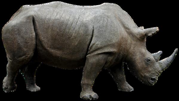 Rhino 01 By Gd08 by gd08