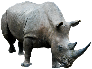 Rhino 03 By Gd08