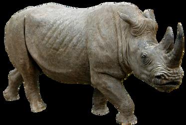 Rhino 04 By Gd08