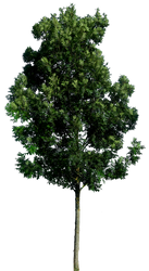 Tree 59 By Gd08 by gd08