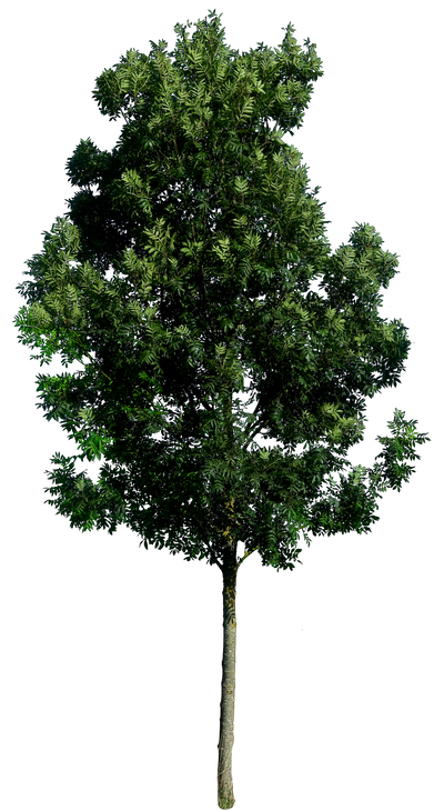 Tree 59 By Gd08