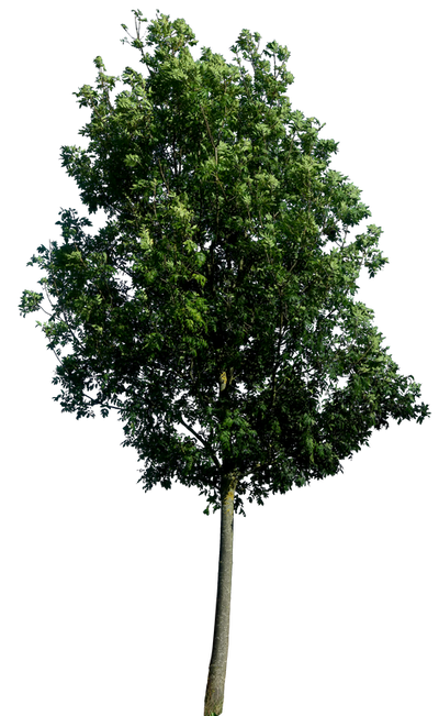 Tree 60 By Gd08