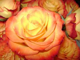 Roses by sithmaith