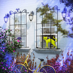 The Yellow Cat and Window
