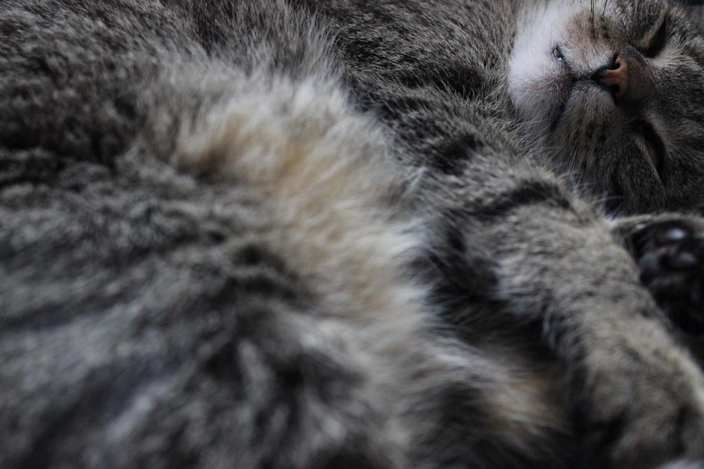 Catscape by WilburMercer
