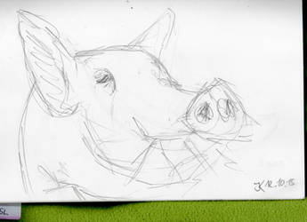 Pig scribble by JuriKnauth