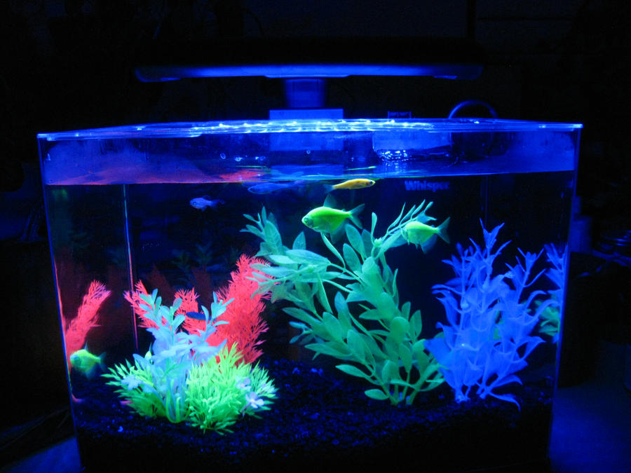 what makes them glow my aquarium club