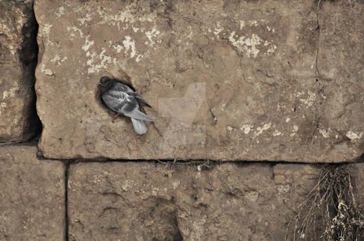 El despertar de un fosil