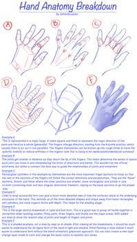 Hand Anatomy Breakdown