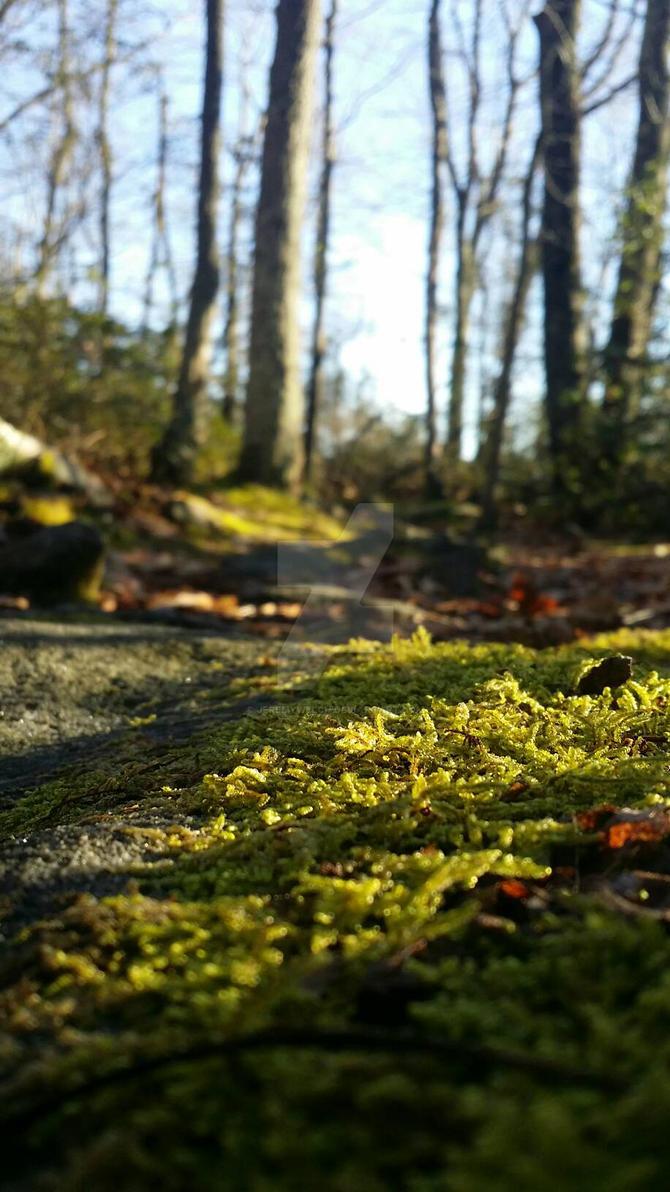 Green winter by JeremyWelch