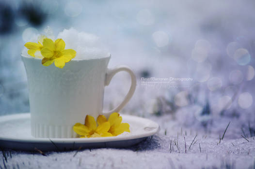 Cup of Snow