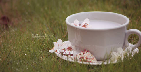 Cup of White