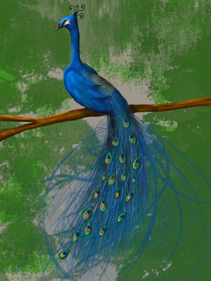 Peacock Digital Painting by designsbyjo