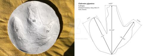 Eubrontes by Ceratopsia