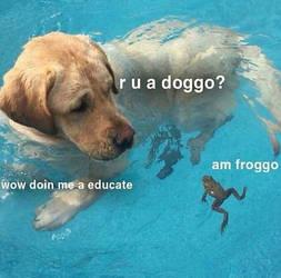 doggo meme by TheIntrovertedGhost