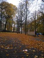 Fall by NewMoon12