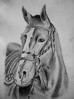 Horse Drawing ~Cami Neimann by Pallet1