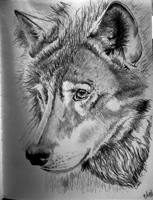 Wolf Drawing ~Cami Neimann by Pallet1