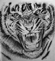 Tiger Drawing ~Cami Neimann by Pallet1