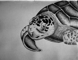 Sea Turtle Drawing ~Cami Neimann by Pallet1