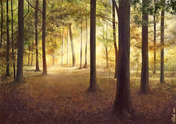 Autumn forest by greatunknown