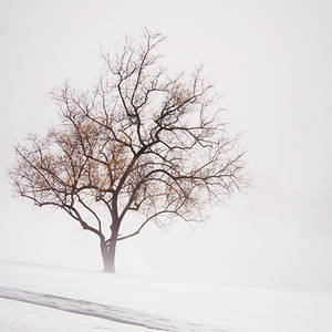 Snow and Fog