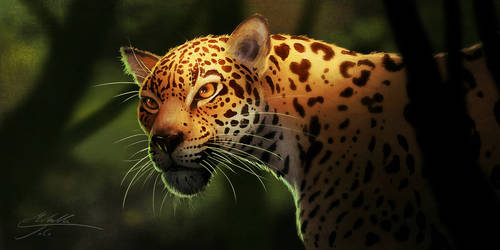 Jaguar by Manweri