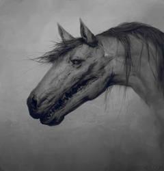 Horse by Verehin