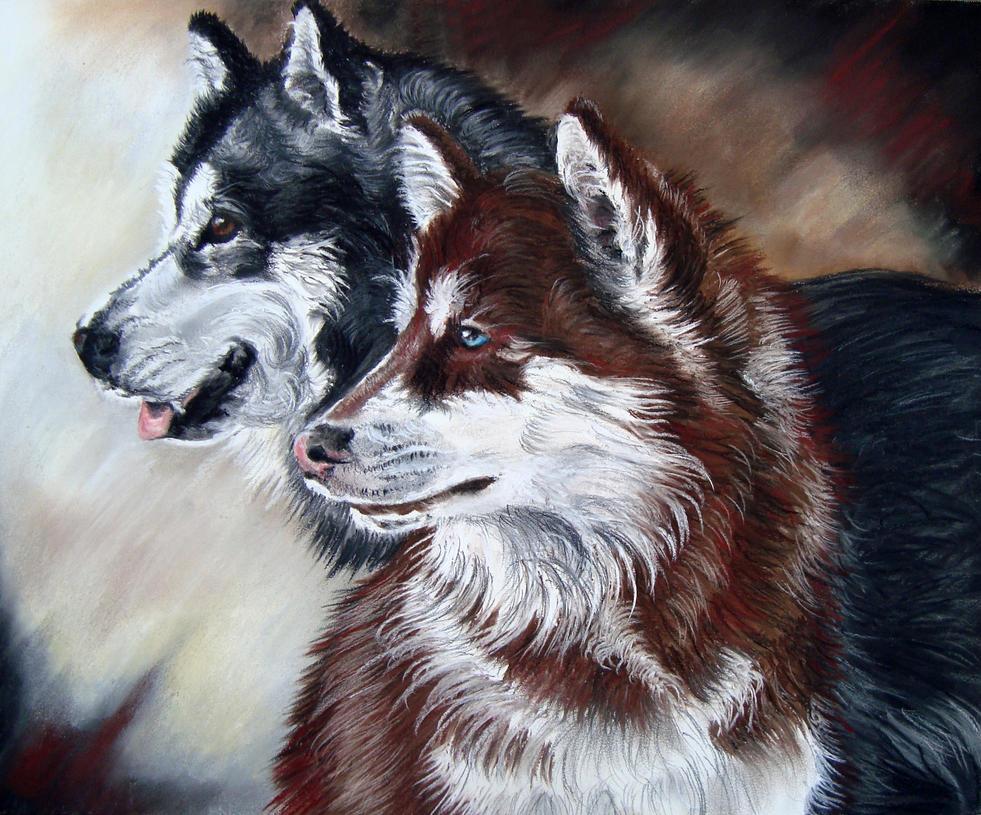 siberian huskies by draw my pets on deviantart