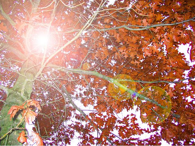 Autumn by littlenikita